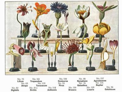 Afbeelding uit de Brendel catalogus uit 1913.